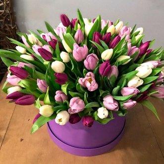 101 фиолетовый и белый тюльпан