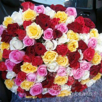 101-raznocvetnaya-roza-50-sm